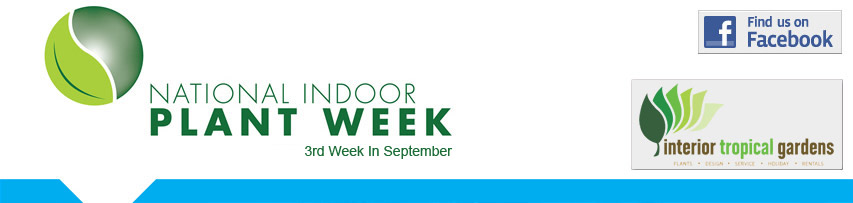 National Indoor Plant Week